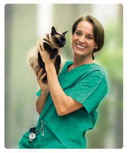Foto: Tierärztin Frau Dr. vom Stein die eine Katze auf dem Arm hält