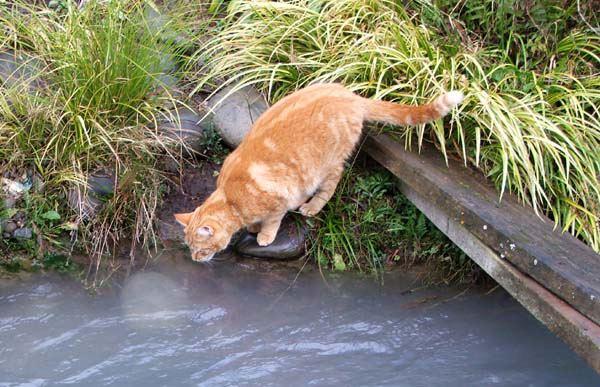 Vorteile Eines Katzenbrunnens