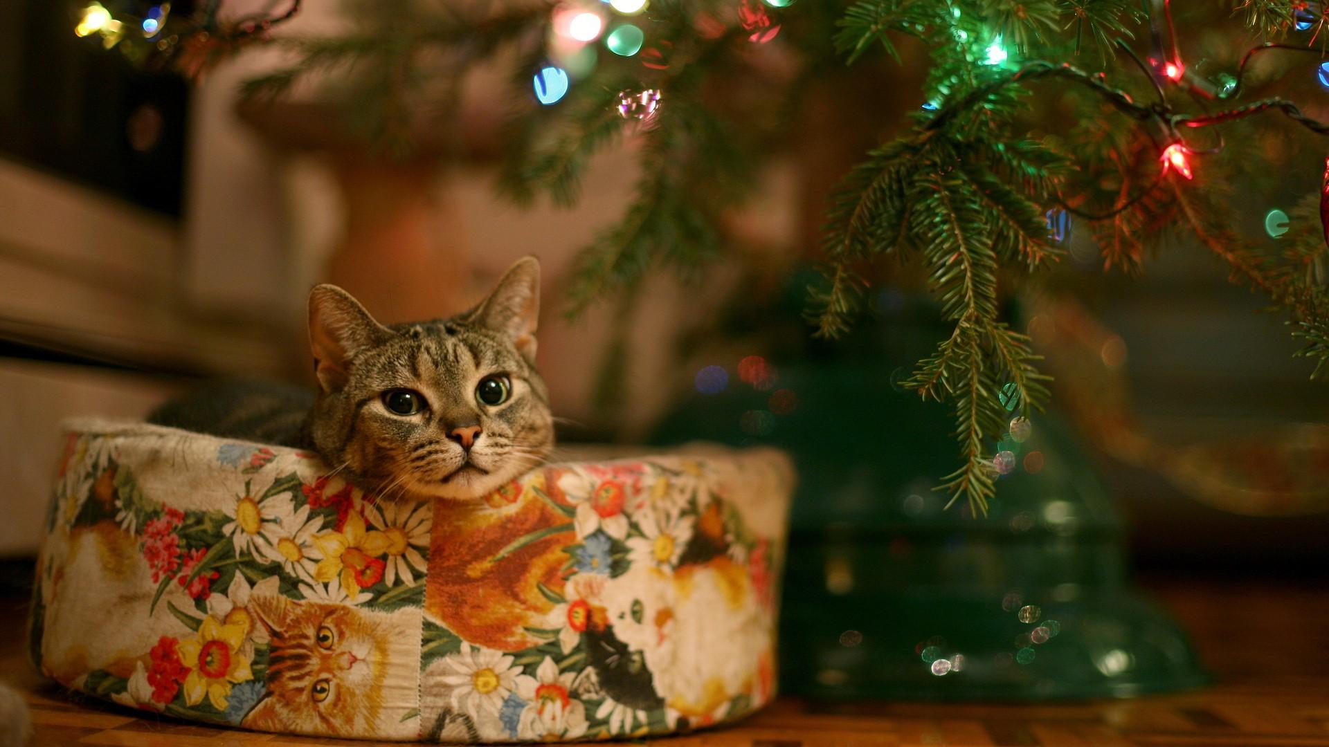Tipps für Geschenke für Katzen und Katzenhalter.
